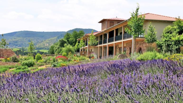 Lavendellust 11.07.-12.07.2020