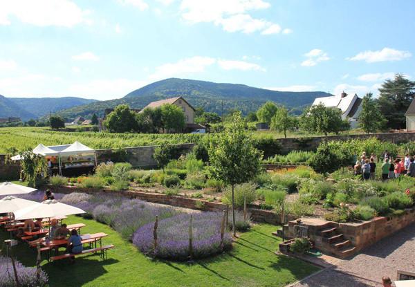 Lavendellust-Kraeutergarten.jpg