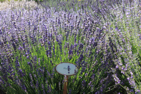 Lavendellust 06.-07. Juli 2019