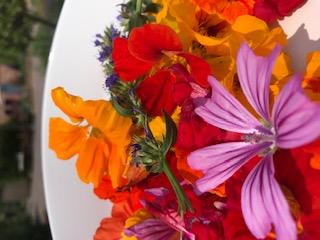 Foto-Blüten.jpg