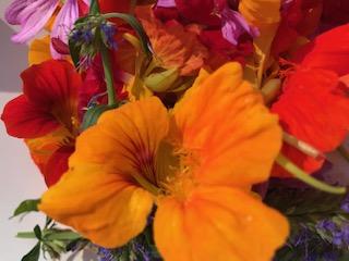 Kapuzinerkresse-Blüten.jpg